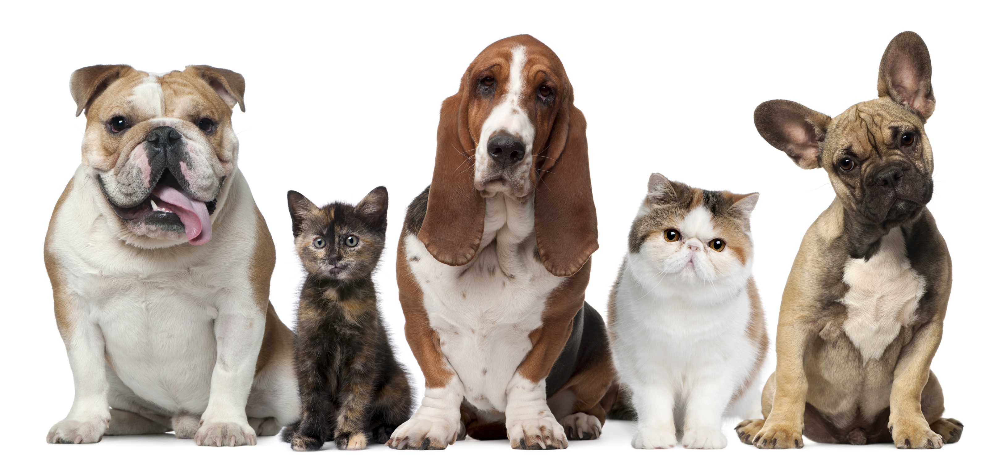 Insurance For Pet Health & Veterinary Care – Now That's Peace of Mind
