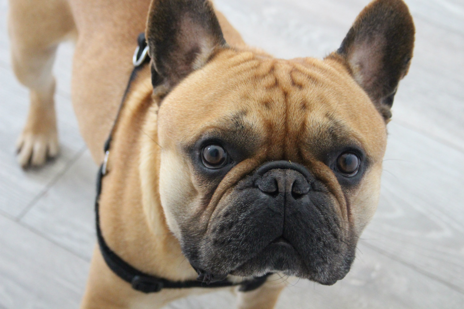 Is Pet Care Insurance Necessary?