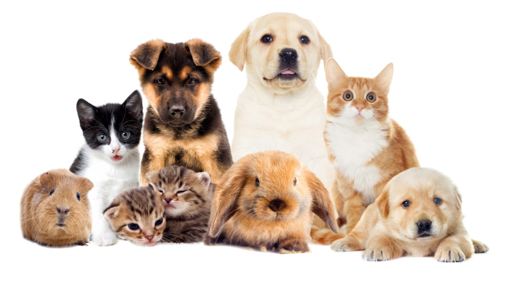Pets Health Insurance - Wise Investment Or Waste of Money ...